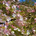 Spring Fling by Bonnie Follett