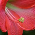 Spring Fling by Pamela Critchlow