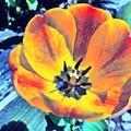 Spring Flower Bloom by Derek Gedney