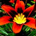 Spring Flower by Joyce Woodhouse