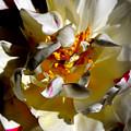 Spring Flower Vibrancy by Sue Harper