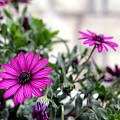 Spring Flowers 2 by Artur Gjino