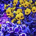 Spring Flowers - Bonn by Samuel M Purvis III