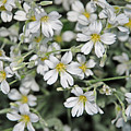 Spring Flowers by Carol  Eliassen