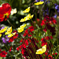 Spring Flowers by Garry Gay