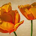 Spring Flowers by Garvin Hunter