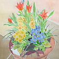 Spring Flowers In Pot by Yvonne Johnstone