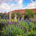 Spring Flowers In The Carmel Mission Garden by Lynn Bauer