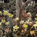 Spring Flowers by Joann Vitali