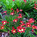 Spring Flowers by Joyce Woodhouse