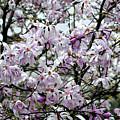 Spring Flowers by Madeline Ellis