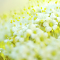 Spring Flowers by Nailia Schwarz