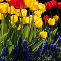 Spring Flowers Square by Carol Groenen