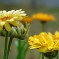 Spring Flowers by Yohana Negusse