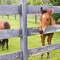Spring Foal by Steven R Breininger
