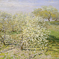 Spring. Fruit Trees In Bloom by Claude Monet