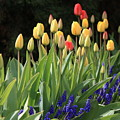 Spring Garden by Carol Groenen