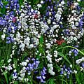 Spring Garden by Kaye Menner