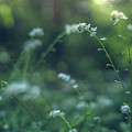 Spring Garden Scene #1 by Gene Garnace