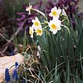 Spring Garden by Steve Karol