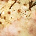 Spring Glory 2 by Debbie Portwood