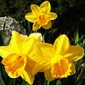 Spring Gold by Jasna Dragun