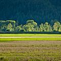 Spring Greens by Albert Seger