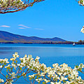 Spring Has Sprung 2 Smith Mountain Lake by The American Shutterbug Society