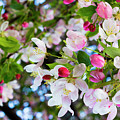 Spring Has Sprung by Denise Harty
