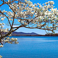 Spring Has Sprung Smith Mountain Lake by The American Shutterbug Society
