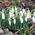 Spring Has Sprung by JoAnne McNamara