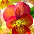 Spring Has Sprung by Marla McFall