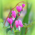 Spring Hearts - Flowers With Vignette 2 by MTBobbins Photography