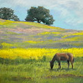 Spring Hill Grazing by Maralyn Miller