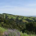 Spring Hills by Suzanne Leonard