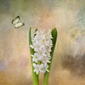 Spring Hyacinth by Kim Hojnacki