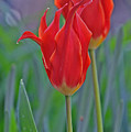 Spring Impression by Damijana Cermelj