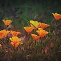 Spring In A Poppin' by Saija Lehtonen