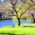 Spring In Bloom by Susan Derrickson Hanna