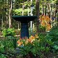 Spring In Blossom by Douglas Barnett
