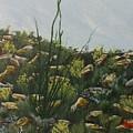 Spring In Borrego by David Stanley