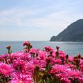 Spring In Cinque Terre by Christine Buckley