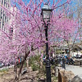 Spring In  Columbus Park 1 by Nina Kindred