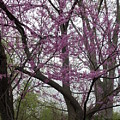 Spring In Indiana by Colleen Cornelius
