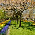 Spring In Keukenhof, Netherlands by Sinisa CIGLENECKI