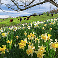 Spring In Litchfield by Bill Wakeley