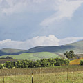 Spring In Livermore by Karen  W Meyer