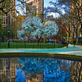 Spring In Madison Square Park by Chris Lord