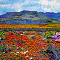 Spring In Namaqualand by Michael Durst