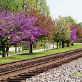 Spring In Pewee by Richard Larson
